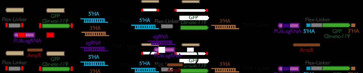 crispr methods and protocols pdf